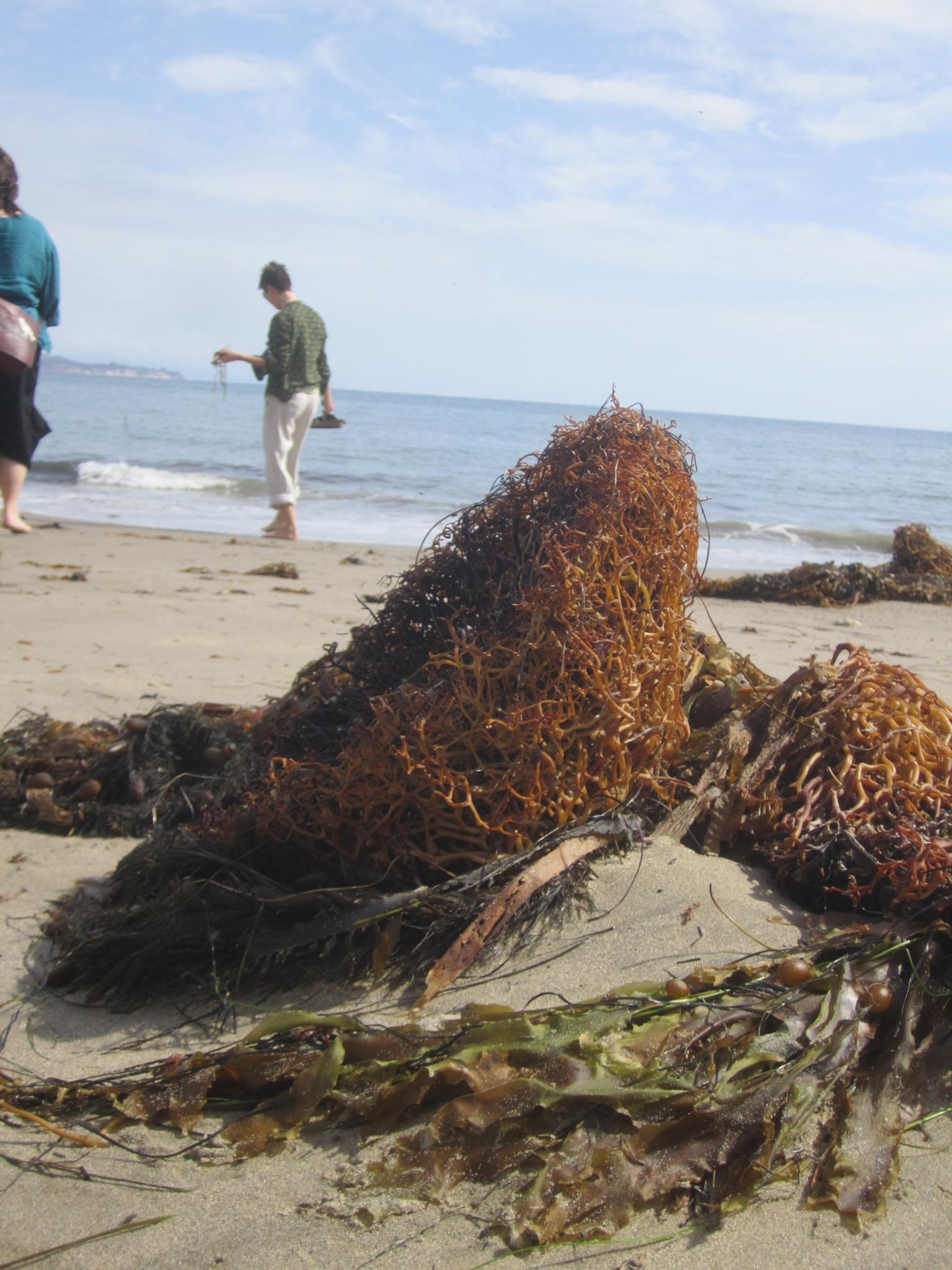 Becoming Ocean: BABEL 2014 at UC-Santa Barbara